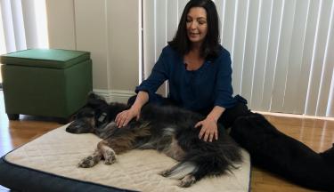 Energy Healing for Animals Level 1
