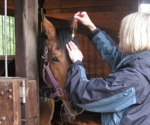 Checking the 6th chakra of a horse EHFA Weened workshop and HSC