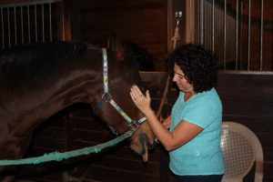 EHFA HSC - EFT on horses