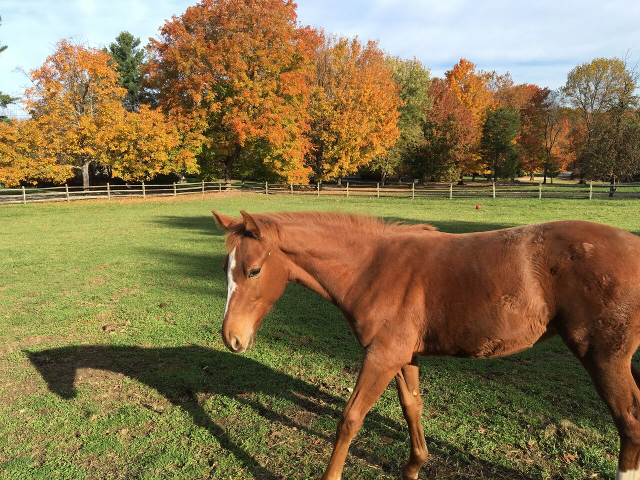 Filly in the Sun