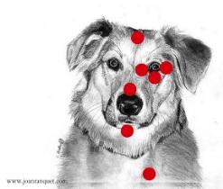 Dog EFT Points
