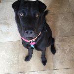 Abby the Dog