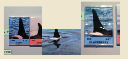 whale adoption