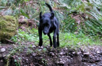 dogs-on-the-trail-angel-wings