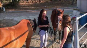 horse energy video- pic