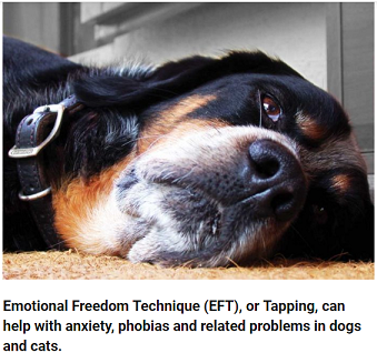 All About EFT (Emotional Freedom Technique) For Animals