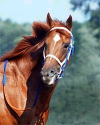 Secretariat - the movie, the horse, One Mind and other random thoughts of an Animal Communicator