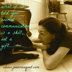 what if I told you animal communication is a skill - Copy