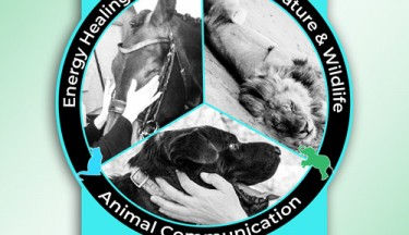 Animal Mastery Fundamentals