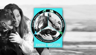 Animal Mastery Program